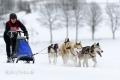huskies-husky-schlittenhunde-rennen-1_dsc6508