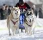 huskies-husky-schlittenhunde-rennen-1_dsc7105