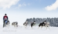 huskies-husky-schlittenhunde-rennen-1_dsc7352