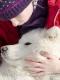 huskies-husky-schlittenhunde-tierfreundschaft-kind-streicheln-1_dsc6969