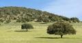 Extremadura-Dehesas-Spanien-A_DSC9436 Kopie