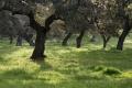 Extremadura-Dehesas-Spanien-A_DSC9690 Kopie