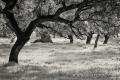 Extremadura-Dehesas-Spanien-A_DSC9753 Kopie