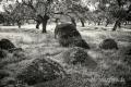 Extremadura-Dehesas-Spanien-A_DSC9777 Kopie