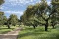 Extremadura-Spanien-A_DSC9467 Kopie