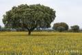 Extremadura-Spanien-A_DSC9603 Kopie