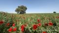 Extremadura-Spanien-A_DSC9624 Kopie
