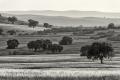 Extremadura-Spanien-A_DSC9875 Kopie