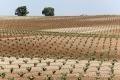 Extremadura-Weinbau-Spanien-A_DSC9666 Kopie