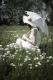 blumenwiese-frau-retro-sonnenschirm-f_o1i8471