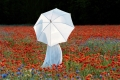 mohnfeld-weiss-sonnenschirm-blumenwiese-frau-e_o1i1296