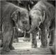 elefanten-junges-baby-babies-kuss-freundschaft-7-b_mg_2764