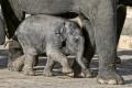 elefantenbaby-geborgenheit-bxo1i2943a