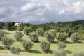 landschaft-olivenbaeume-toscana-4-1_dsc1685
