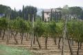 landschaft-weinberg-weingut-toscana-4-a_dsc2233