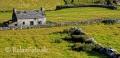 Landschaften-Weiden-Steinmauern-Steinwaelle-Steinwall-Wall-Wild-Atlantic-Way-Irland-Irische-Kueste-Westkueste-A_SAM5149