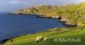 Landschaften-Felsen-Steilkueste-Wild-Atlantic-Way-Irland-Irische-Kueste-Westkueste-A_SAM5160