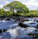 Landschaften-Fluss-natuerlicher-Bach-Wild-Atlantic-Way-Irland-Irische-Kueste-Westkueste-A_SAM4780