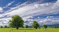 Landschaften-Weidelandschaft-Landschaft-Wild-Atlantic-Way-Irland-Irische-Kueste-Westkueste-A_SAM5212