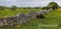 Landschaften-Weiden-Steinmauern-Steinwaelle-Steinwall-Wall-Wild-Atlantic-Way-Irland-Irische-Kueste-Westkueste-A_SAM4811