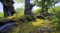 Landschaften-Wild-Atlantic-Way-Irland-Irische-Kueste-Westkueste-A-Sony_DSC2313