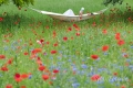 frau-relaxen-entspannung-ruhe-mohn-blumen-wiese-j_mg_1438