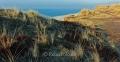 Rotes-Kliff-Wenningstedt-Duenen-Sand-Sylt-Winter-Bilder-Fotos-Strand-Landschaften-RX_01452